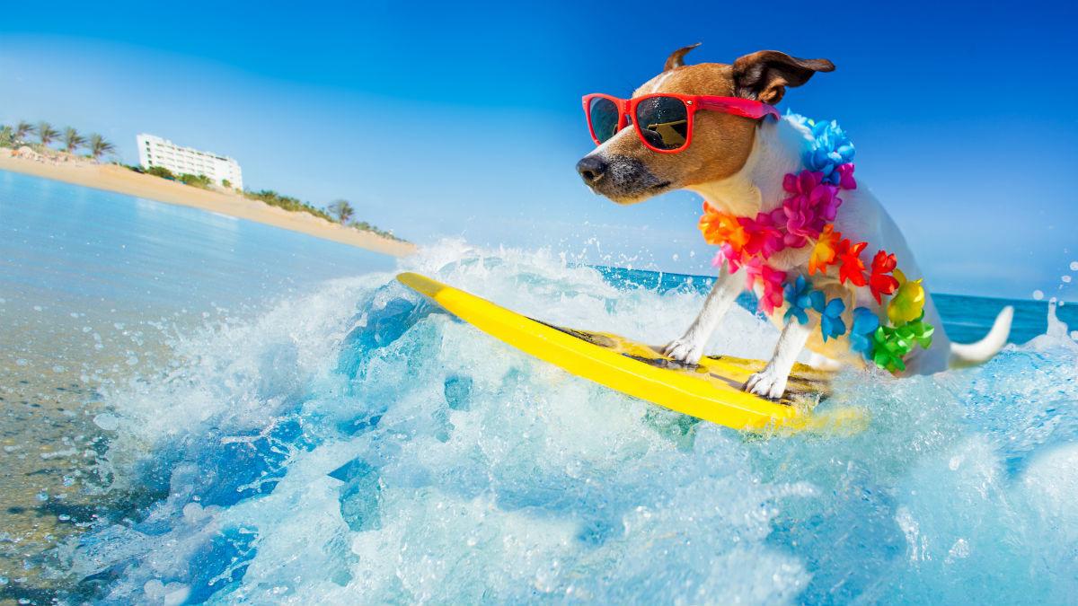Курорт Дахаб - лучшее место для водных видов спорта!